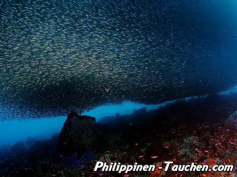 Sardinen vor Pescador Island