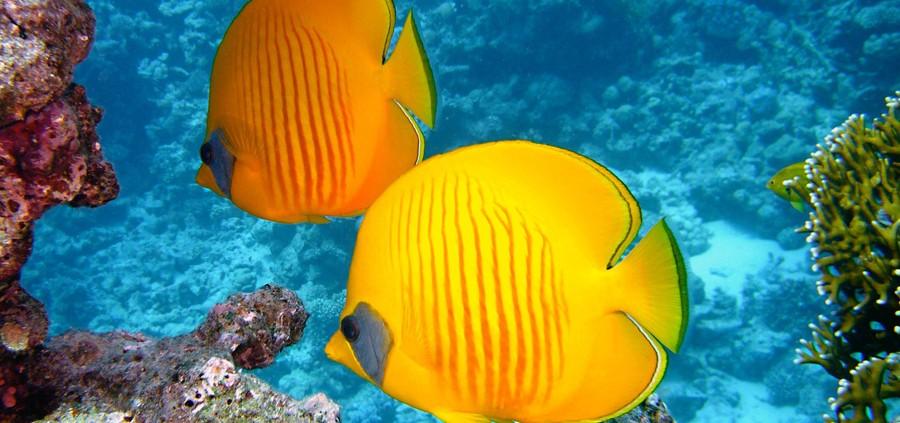 Dive-Puerto-Galera